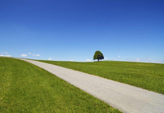 見通しの良い一本道に目印となる一本の樹