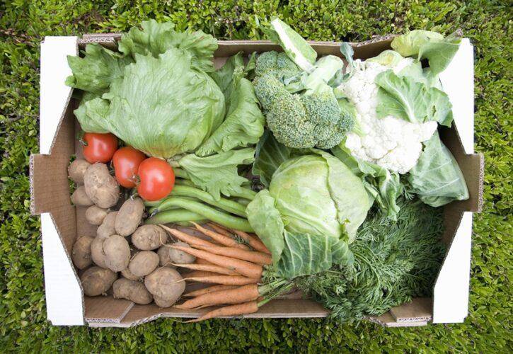 いろんな種類の野菜が入った箱
