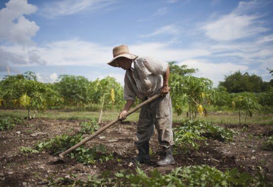 畑仕事をもくもくとしている人