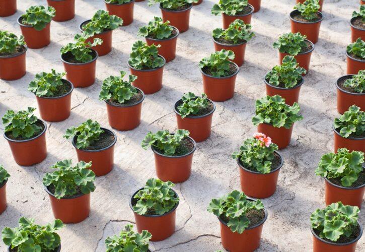 無数の鉢植え